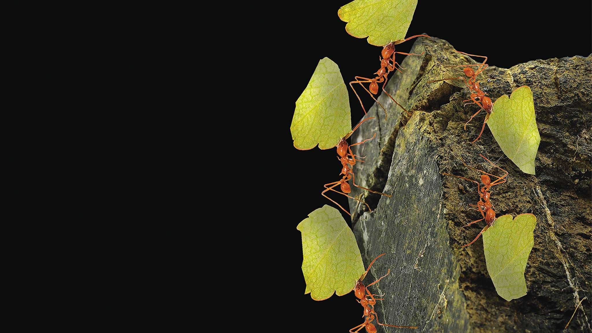 Ameisenprinzip: Microservices ersetzen den Monolithen