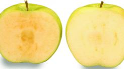 Biotech-Äpfel aus Kanada