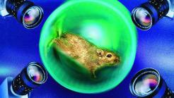 Hamster in Laufrad