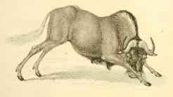 Fortschritte: GNU-Projekt aktualisiert Hurd und Mach