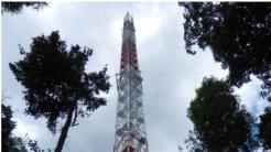 Ein Rekord-Turm im Urwald: Auf der Spur der Klimageheimnisse