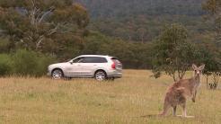 Fahrassistenzsysteme: Volvo hat Probleme mit Kanguru-Erkennung