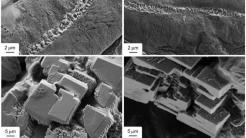 Robuster Pilz könnte selbstheilenden Beton ermöglichen