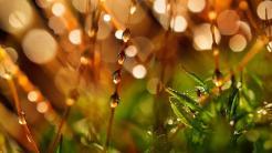 Der Herbst hat viele Facetten - die Bilder der Woche (KW 43)