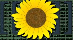 Zehn Sicherheitslücken in Wiki-Software MediaWiki