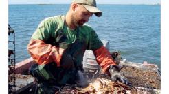 Vom Fischer zum Unterwasser-Farmer