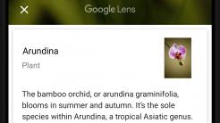 Google-Bilderkennung Lens für alle Android-Smartphone und sogar iOS