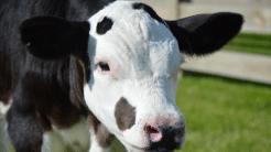 US-Lobby will Gentechnik in der Landwirtschaft vorantreiben
