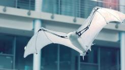 Festo entwickelt Flughund-Roboter und verbesserte Radlerspinne