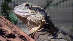 Operation Vivarium: Britische Polizei nimmt LizardStresser-Nutzer hoch