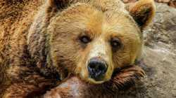 EIn Bär kann schon ein Bild der Gelassenheit abgeben