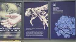 EInk: Farbige Kügelchen, Schwarzweiß-Display mit 600 fpi