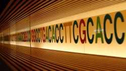 Studie: Jeder Fünfte könnte unerkannt krankheitsrelevante Gen-Mutation sich tragen