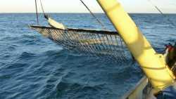 Fischerei: Neue Elektronetze für Fischkutter