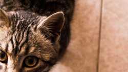 Remote Code Execution: Apache-Tomcat-Entwickler schließen Sicherheitslücke