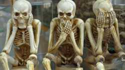 Skelette: Nichts hören, nichts sagen, nichts sehen