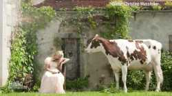 Kühe als Modell