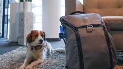 Vodafone vernetzt Auto, Haus und Hund