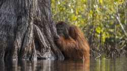 National Geographic wählt Naturfotografen des Jahres