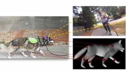 US-Forscher trainieren künstliche Intelligenz mit Daten über Verhalten von Hunden