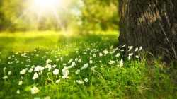 Spring Cloud Open Service Broker 2.0 unterstützt Spring MVC