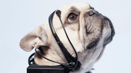 Verriss des Monats: Was denkt der Hund?