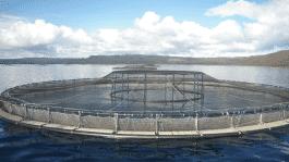 Fischtransport per Hyperloops