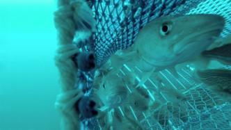 Umweltfreundlicher Fischen dank besserer Fangmethoden