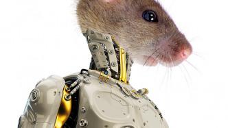 Ferngesteuerte Tiere mit neuen Sinnen