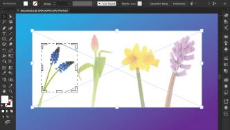 Adobe verteilt Updates für Illustrator und InDesign