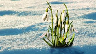 Spring 5 unterstützt Reaktive Programmierung und Java 9