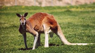 Australien will Apple zur Entschlüsselung von iMessage & Co. überreden