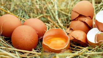 Skandal-Eier erkennen dank Abelssoft-App