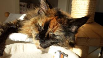 Katzentatzen – von der geringen Nützlichkeit und großen Sinnlichkeit des Catcontens