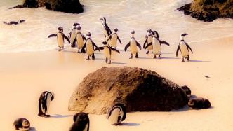 IBM i heute: Linux und Open Source mit dem Midrange-Server