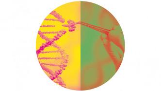 Darf ich meine Nachkommen genetisch verändern?