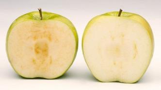 Gentechnik macht Früchte haltbarer