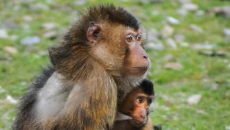 Abgas-Tierversuche: VW beurlaubt ersten Manager