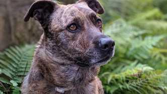 GPS-Tracker für Haustiere