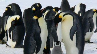 Open Source Summit Europe: Realtime-Erweiterungen bald im Linux-Kernel