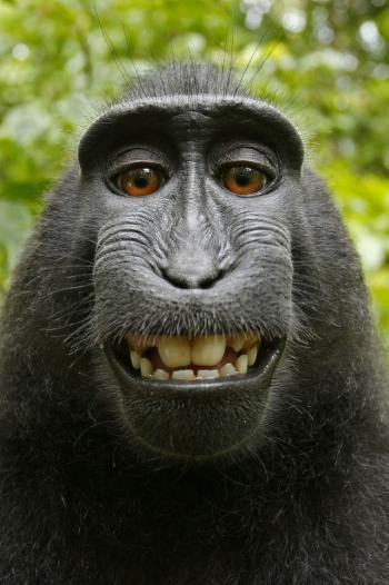Eines der Affen-Selbstportraits