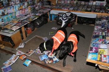Labrador-Hunde 'Lucky' und 'Flo'
