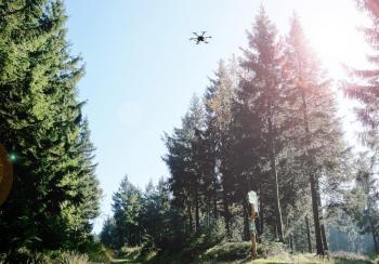 Mit Multikoptern sollen von Borkenkäfern befallene Bäume einfacher ausfindig gemacht werden.