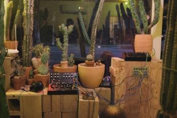 """Laut Moog werden die Synthesizer derzeit für eine Installation namens """"BioRhythmia"""" genutzt. Die Kontrollspannungen zur Steuerung der Instrumente werden dabei von einem Kaktus geliefert, sodass man der Musik der Pflanze lauschen kann. Ob der 30 Jahre alte Kaktus bereits Urheberrechte an seiner Musik geltend gemacht hat, ist bislang nicht bekannt."""