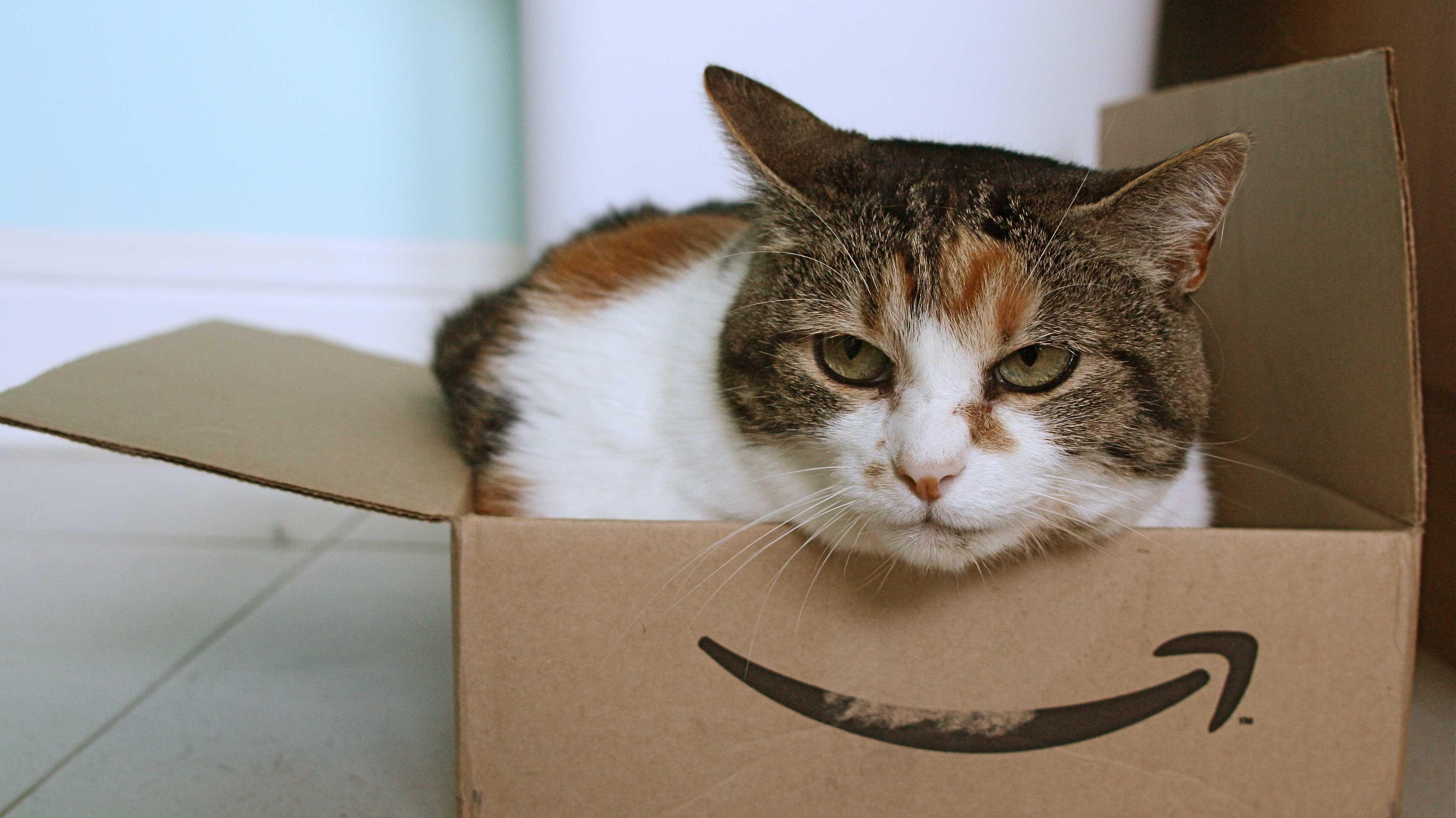 Katze lugt aus Amazon-Schachtel