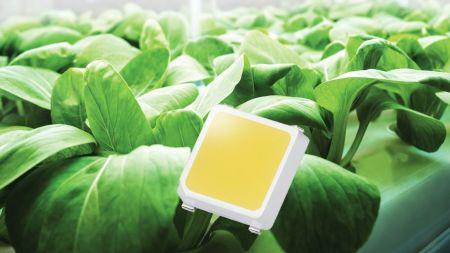 LEDs für Gewächshäuser und vertikale Gärten