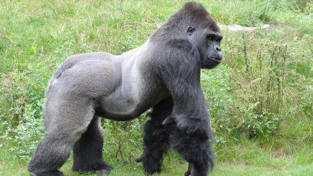 Microservices: Kong Gateway 2.3 spendiert dem Gorilla einen Sandkasten