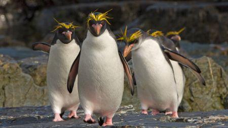 Linux-Kernel: Google bezahlt künftig zwei Entwickler mit Sicherheits-Fokus
