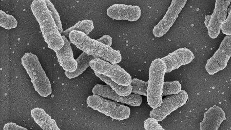 heise+ | Seuchen: Resistente Bakterien sind die nächste Pandemie