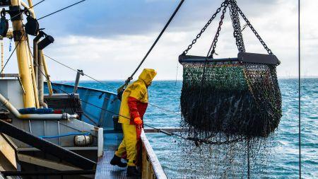 Warum fehlender Fischkot die Kohlenstoff-Bindung im Ozean gefährdet